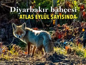 Manset_Diyarbakir_294 | Atlas |