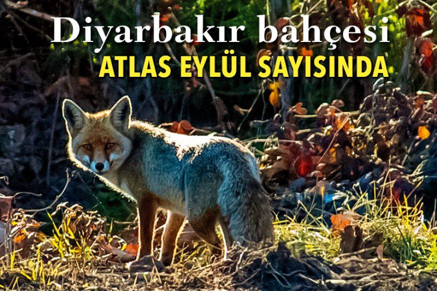 Diyarbakır'ın Bahçesi
