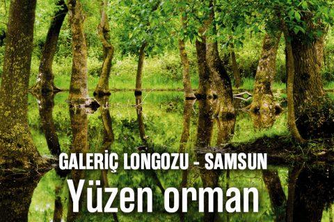 GALERİÇ LONGOZU – SAMSUN: Yüzen orman