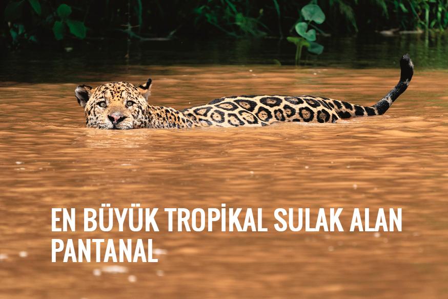 En büyük tropikal sulak alan Pantanal