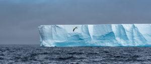 Antarktika'da yaşayan 40'ın üzerinde kuş türü arasında Albatros da yer alıyor.