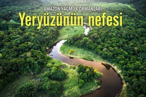 AMAZON YAĞMUR ORMANLARI: YERYÜZÜNÜN NEFESİ