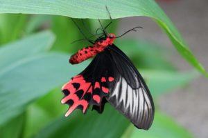 bu-bahcede-binlerce-kelebek-var   Atlas  
