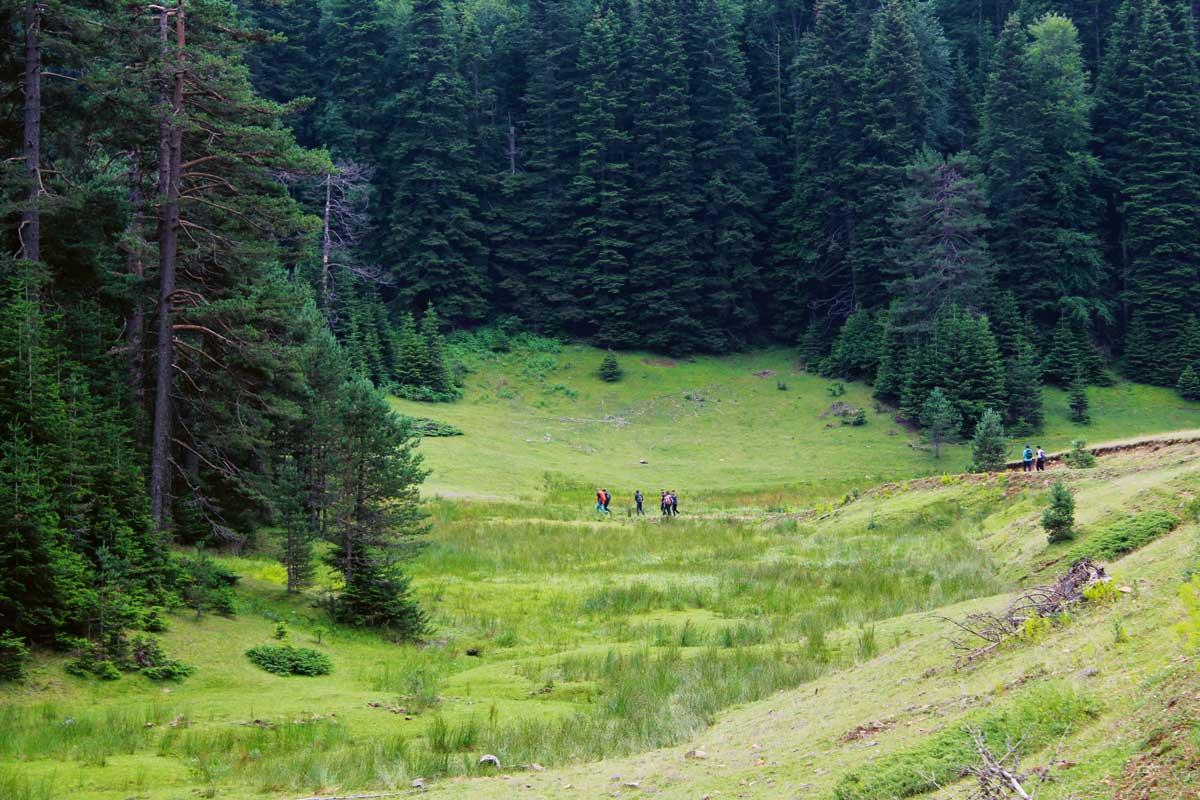 Ormanın sesini dinle: Düzce Güzeldere Şelalesi | Atlas | Atlas Rotaları