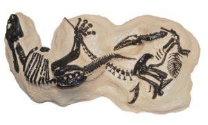 olumcul-dovuse-tutusan-2-dinozor-bu-fosillerin-sahibi-kim   Atlas  