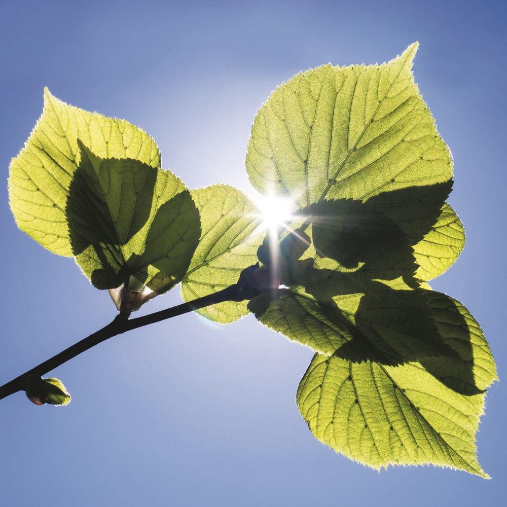 Atmosferde oksijenin birikmesi organik karbonun saklanmasına bağlı | Atlas | karbondioksit
