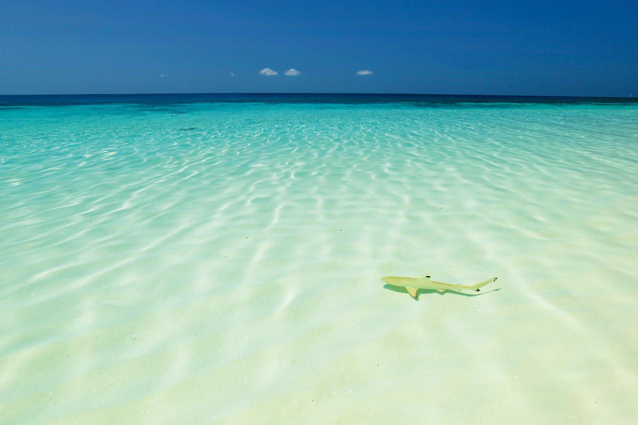 Mercanda yaşam: Maldivler | Atlas | Atlas Rotaları