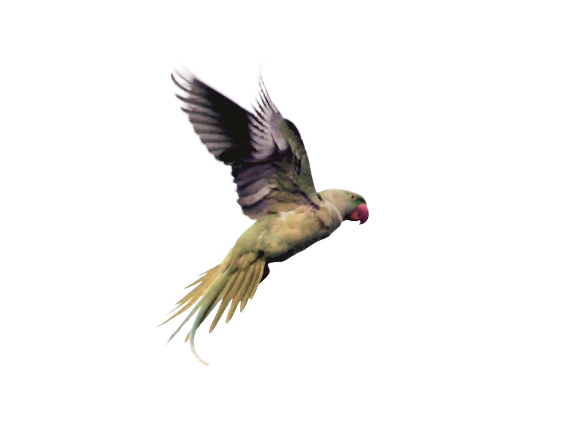 5000 papağan aramızda | Atlas | Keşfet