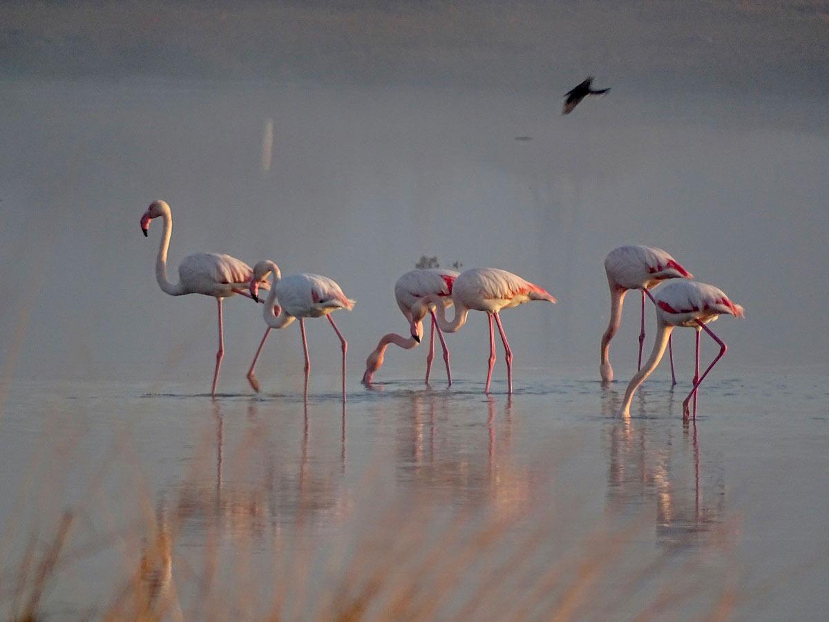 """9 Mayıs """"Dünya Göçmen Kuşlar Günü"""": Alaçatı'nın kuşları   Atlas   Doğa Coğrafya"""