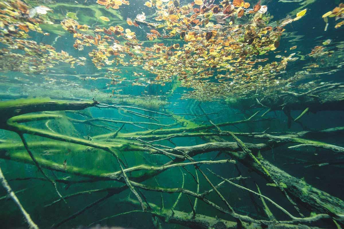 Su yeşili orman: Sülüklügöl / Bolu | Atlas | Gezi