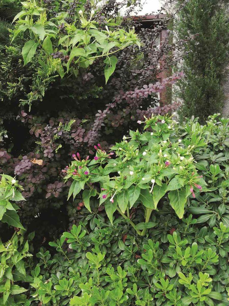 Kaz Dağları'nın bitki cümbüşü | Atlas | Gezi