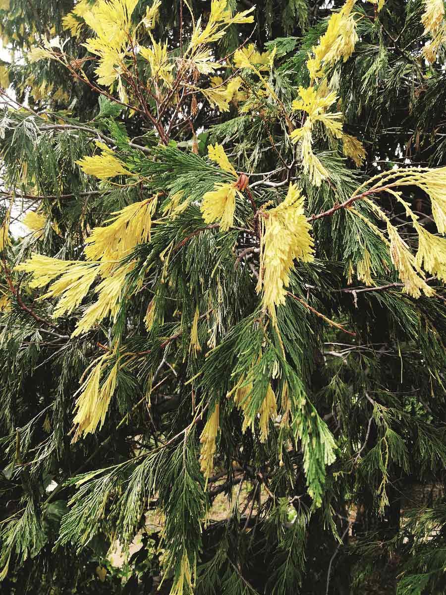 Kaz Dağları'nın bitki cümbüşü | Atlas | Doğa Coğrafya