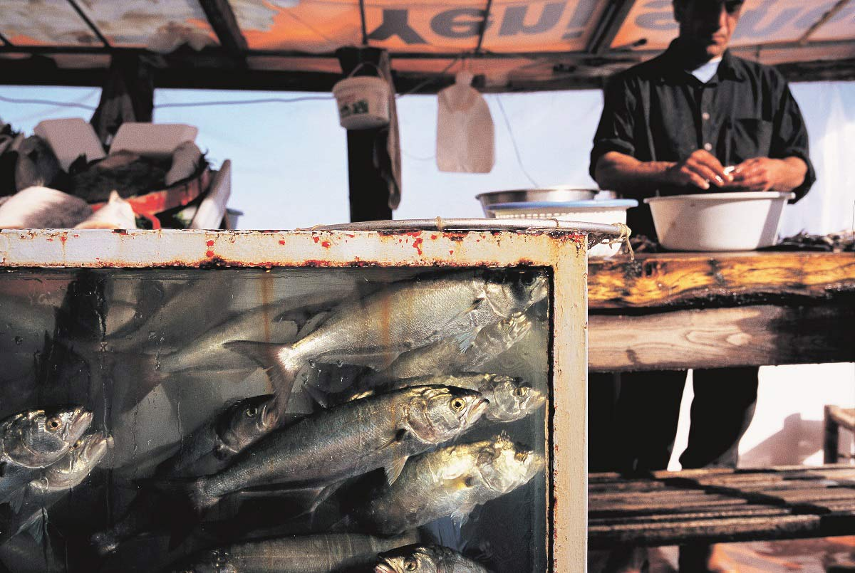 Balıklar nereye gitti? | Atlas | Gündem