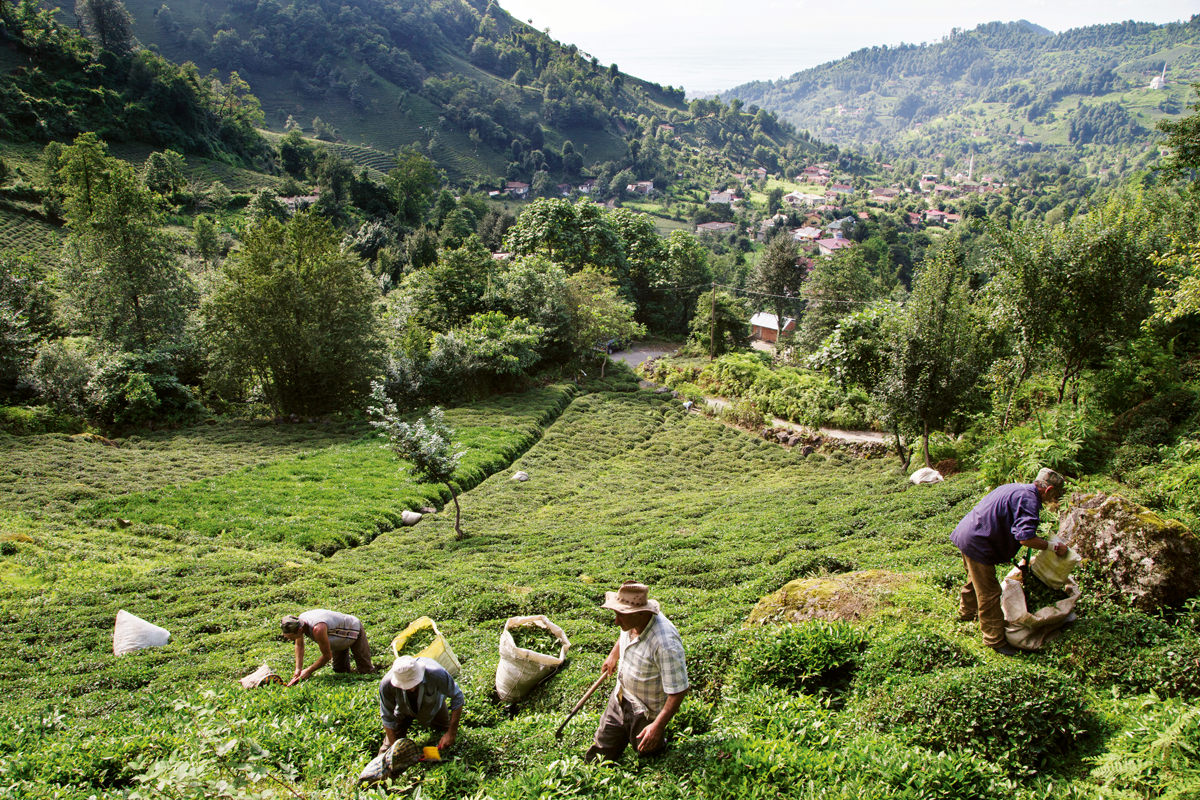 İklim krizinde tarım | Atlas | Keşfet